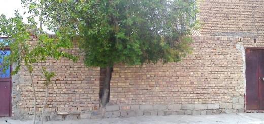 ابتکار جالب شهروند چهاربرجی برای جلوگیری از قطع شدن یک درخت