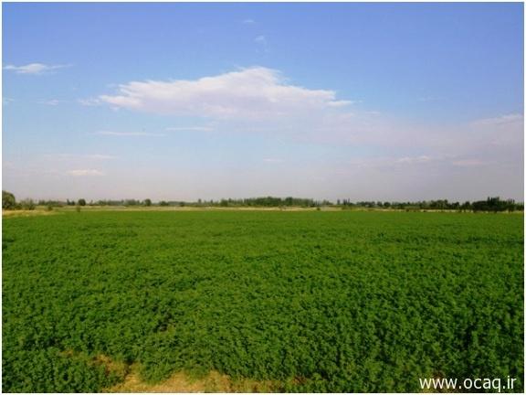 کشاورزی مکانیزه در چهاربرج