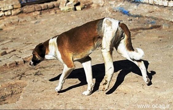 رفتار بسیار نامناسب با سگهای ولگرد